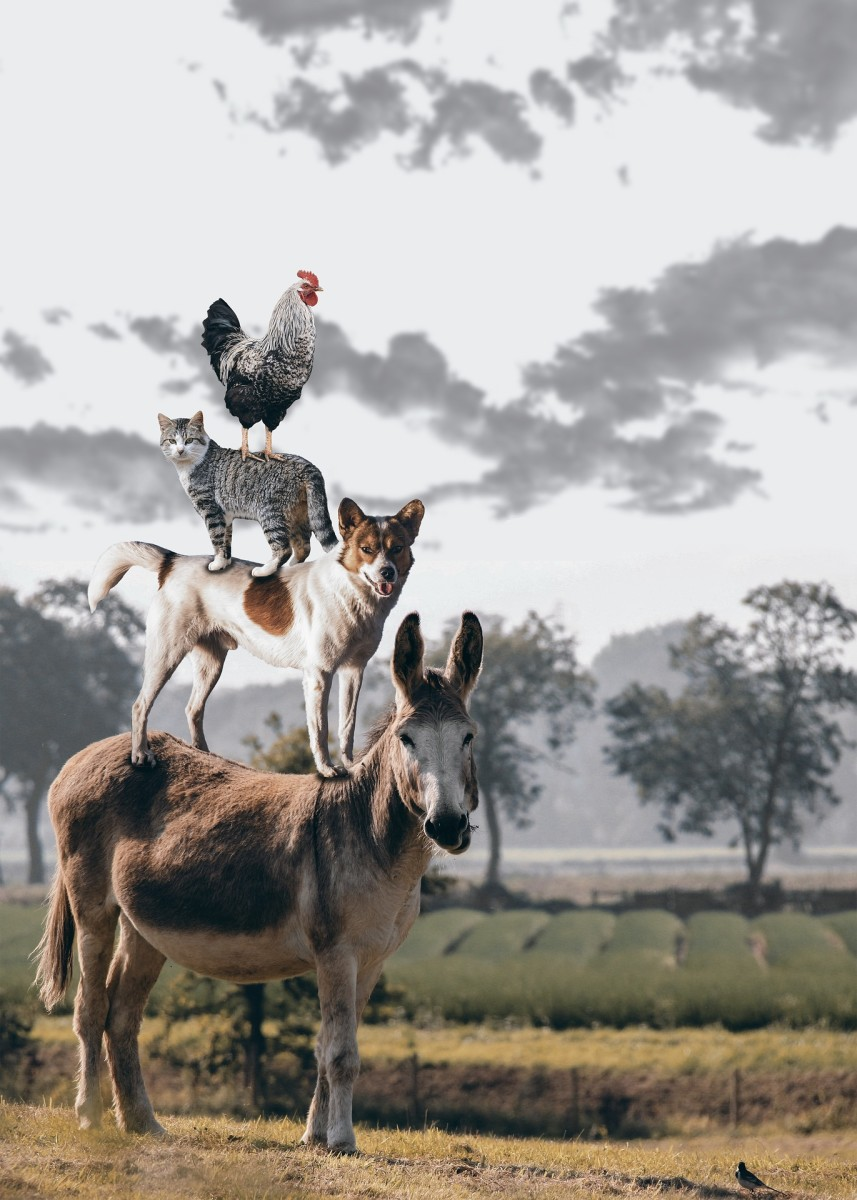 Crazy farm animals