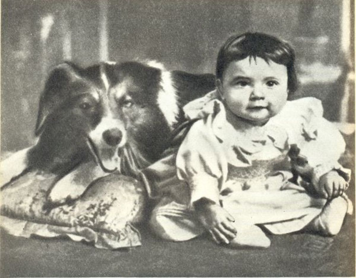 The First 10 Famous Dogs in Hollywood