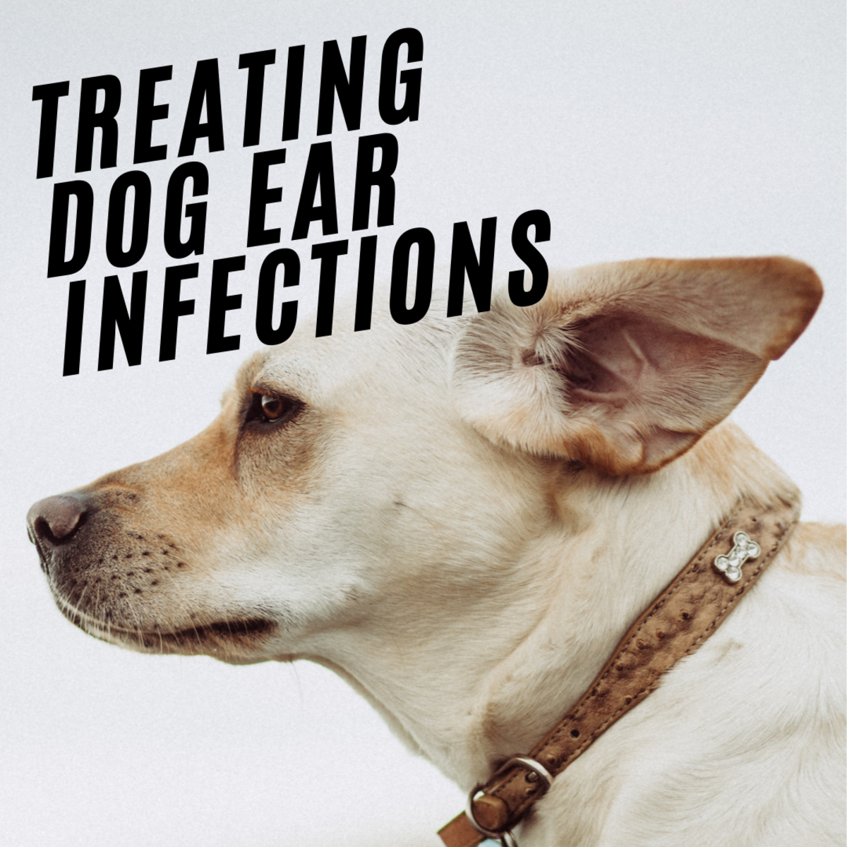 Treating Dog Ear Infections