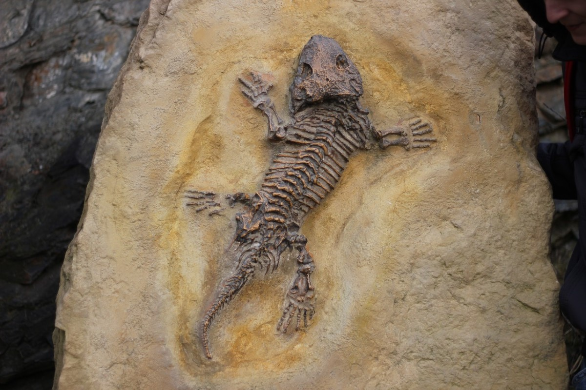 10-fascinating-fossils-with-mysteries-or-rare-features