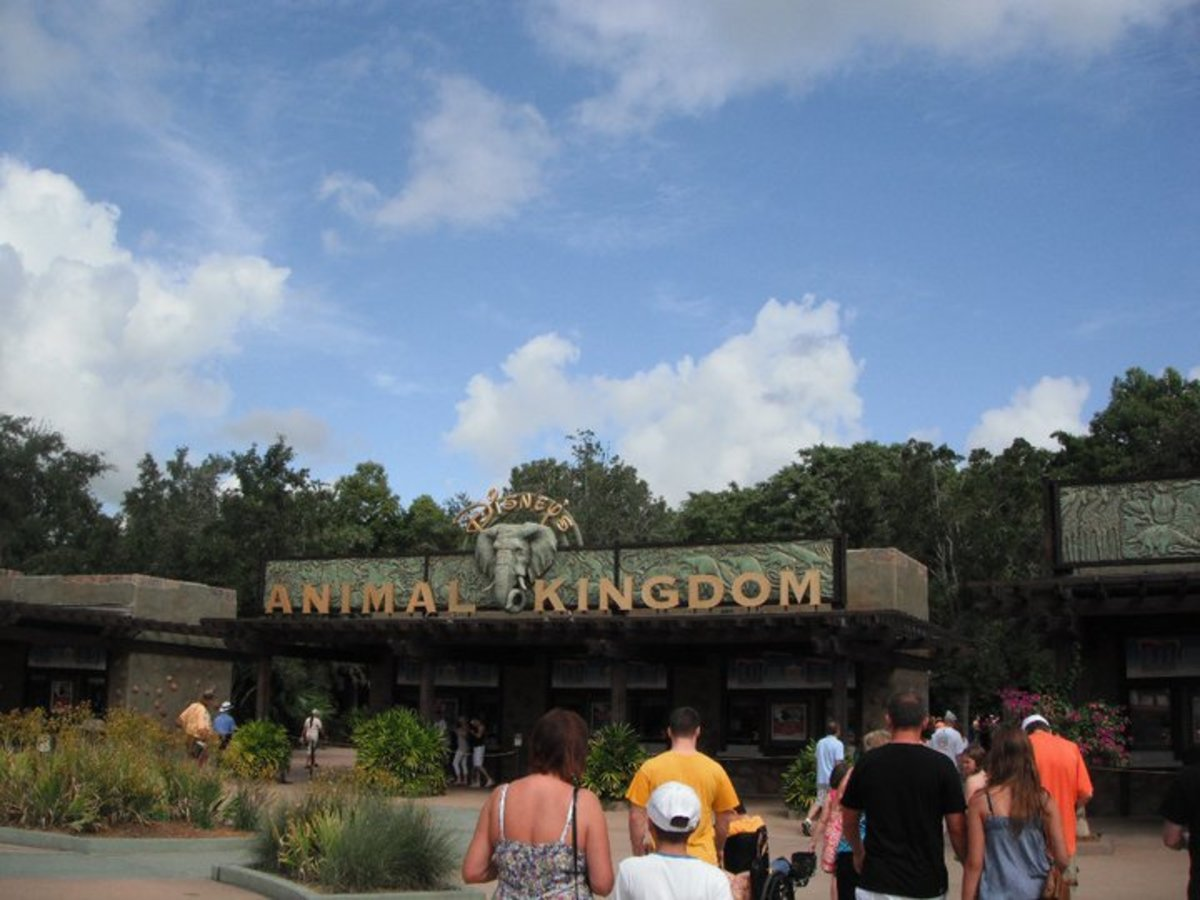 4 Reasons You Should Spend a Full Day at Disney's Animal Kingdom