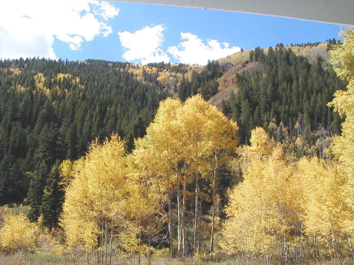Yellow Seasons