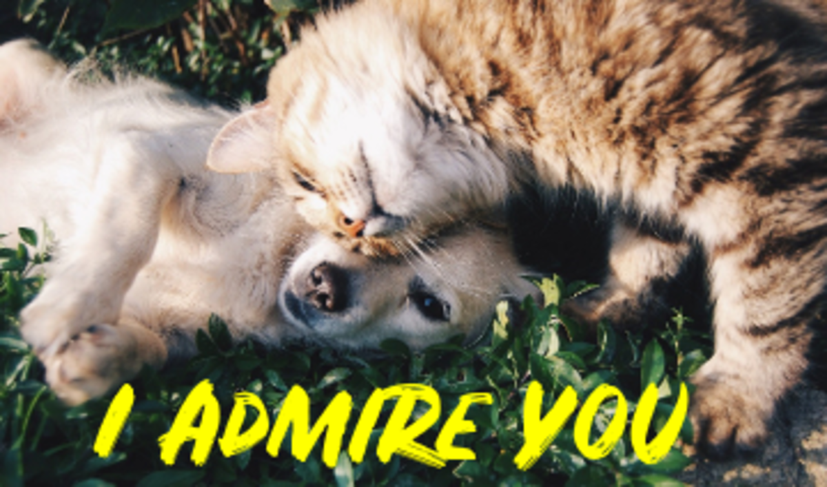 Poem: I Admire You as a Person