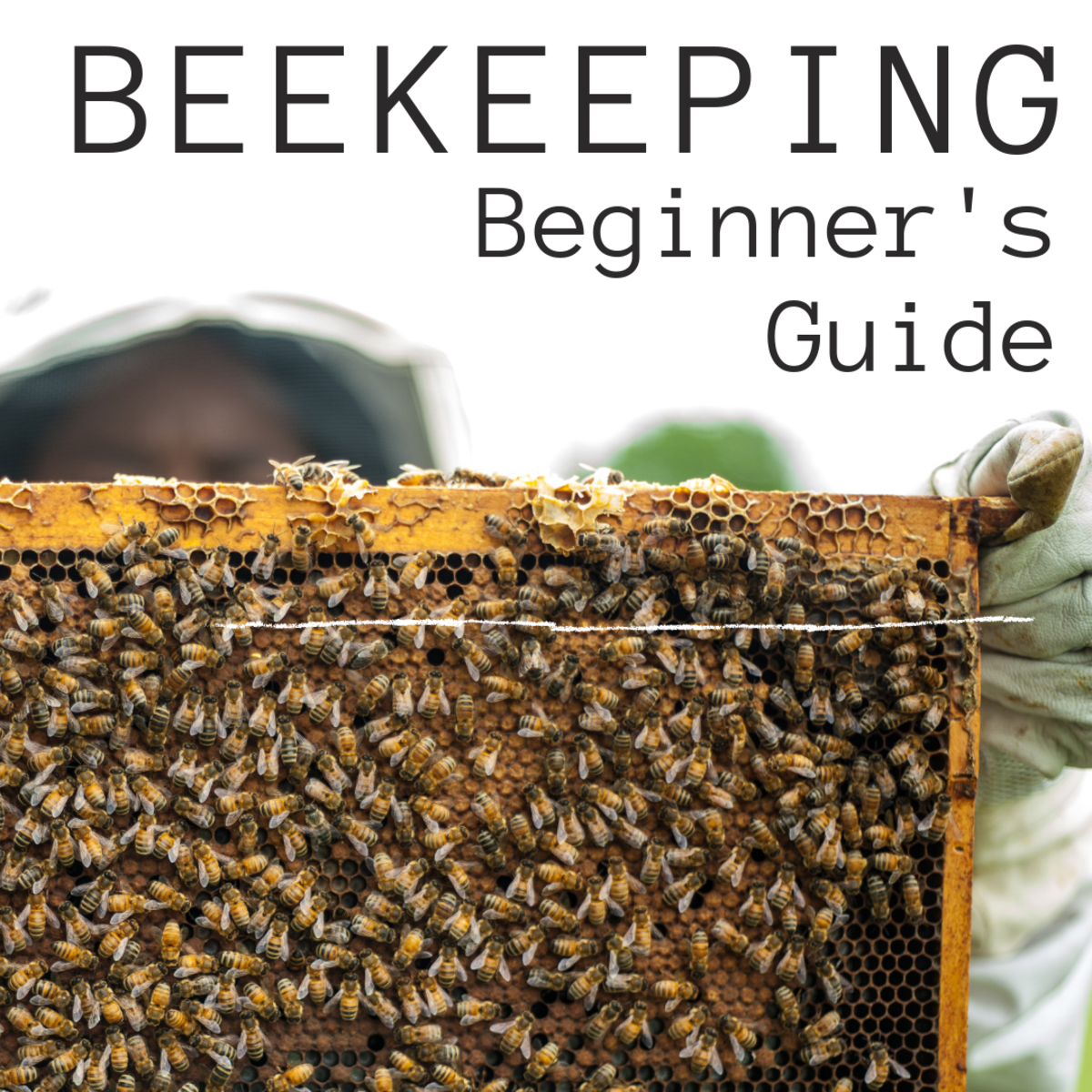 Beekeeping Beginner's Guide: How to Set Up a Beehive