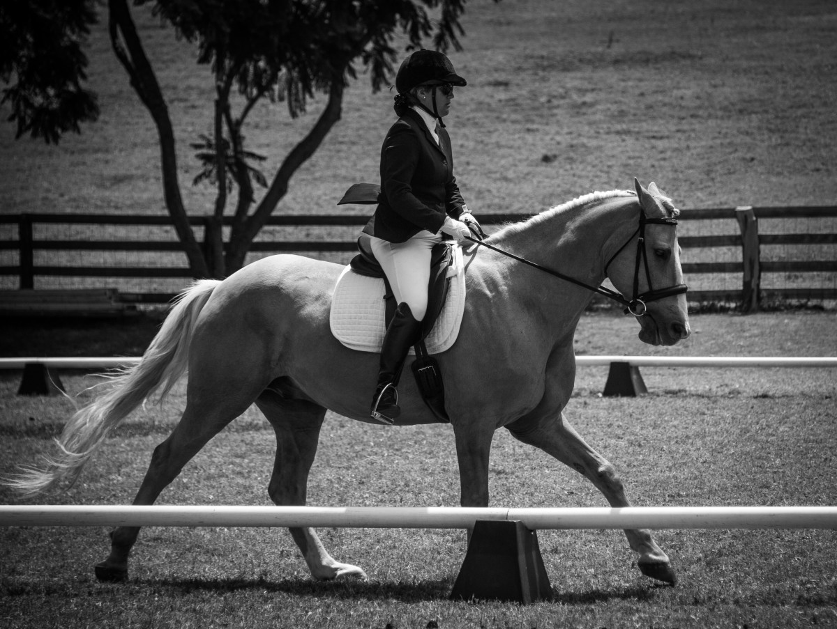 Riding my first horse, Gillette in a dressage show