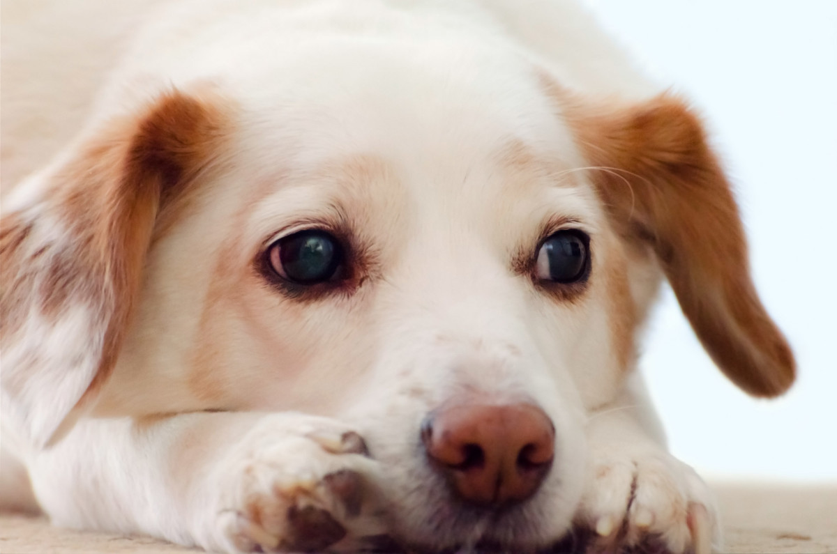 Do Dogs Get Depressed in Winter? How Seasonal Affective Disorder (SAD) May Affect Your Pet