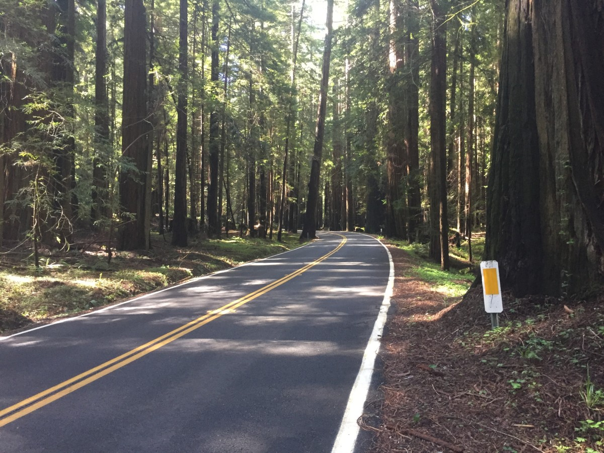 Driving Through the Redwoods on California's Coast