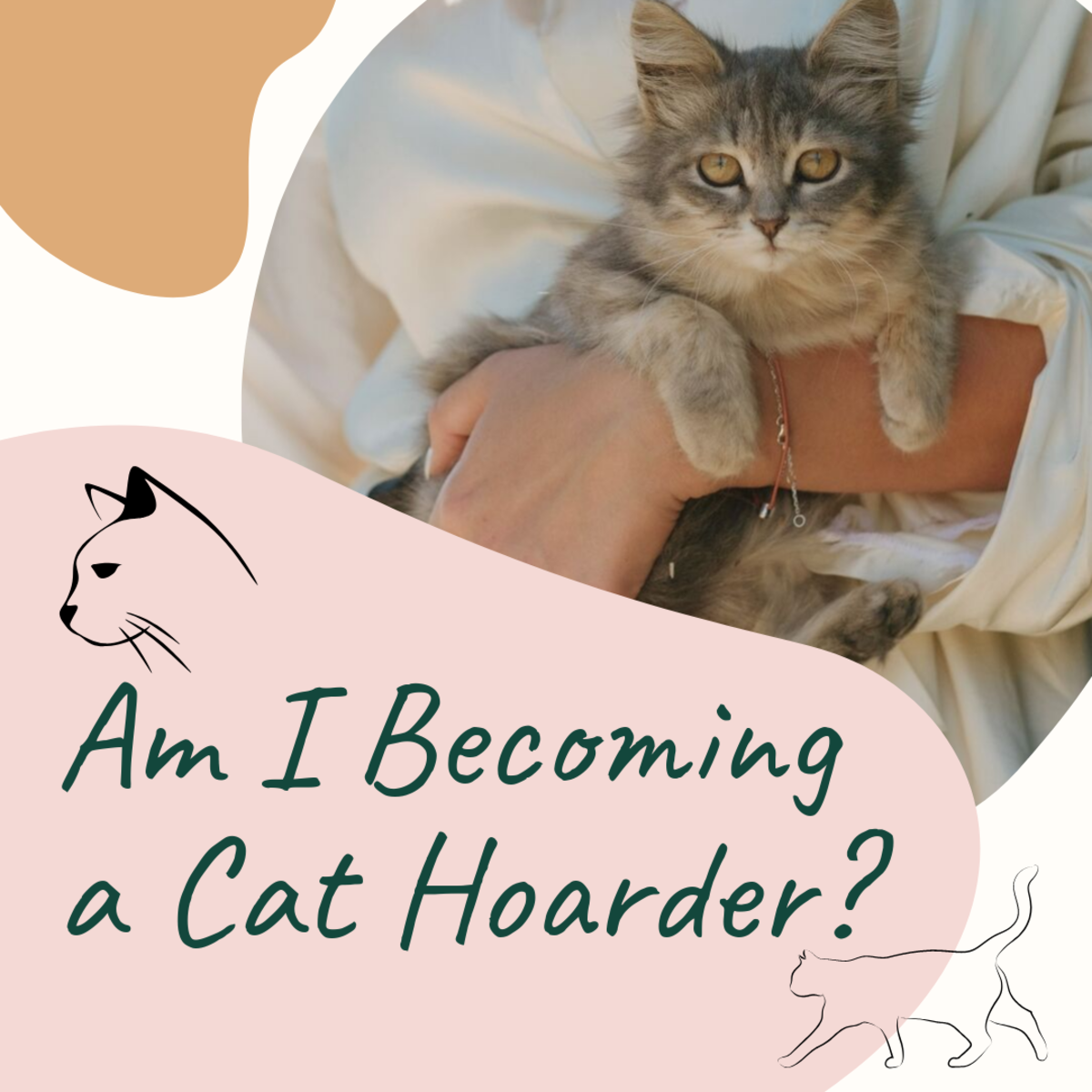 Am I Becoming a Cat Hoarder? Questions to Ask Yourself (or a Friend)