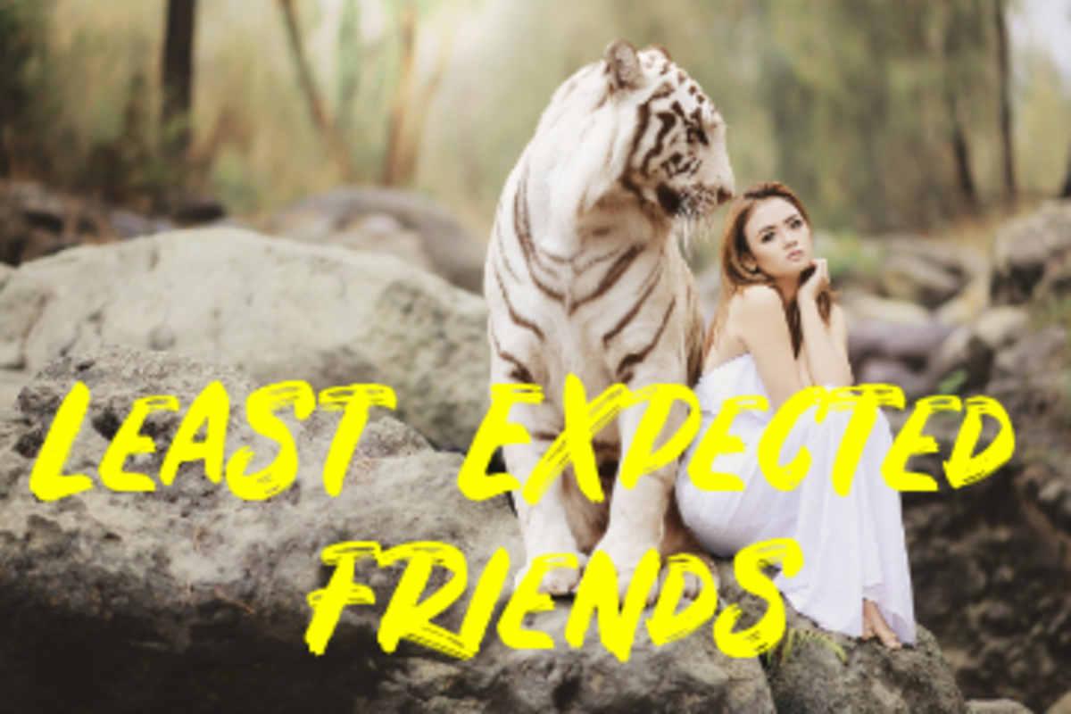 Poem: Least Expected Friends