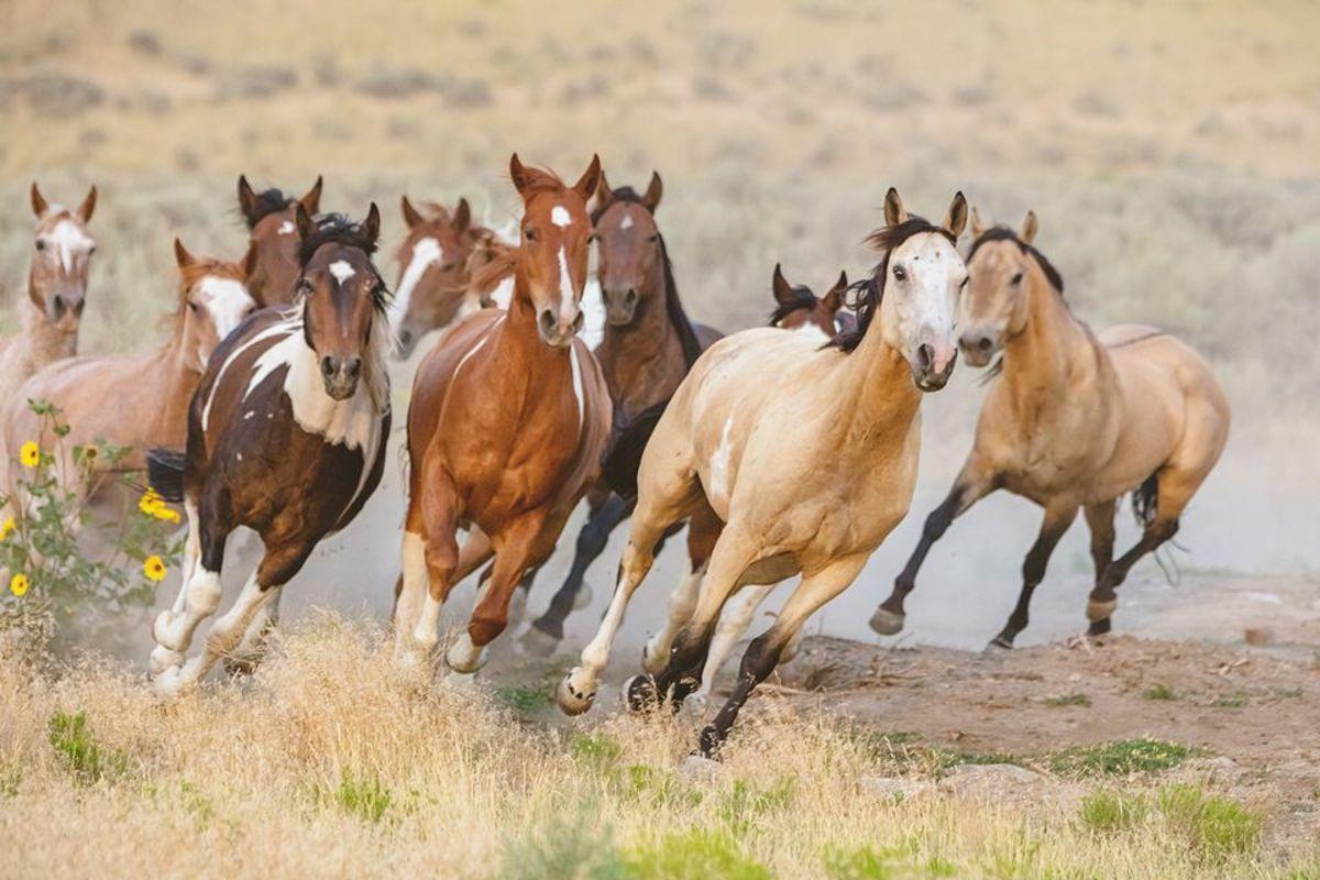 Being a Wild Horse
