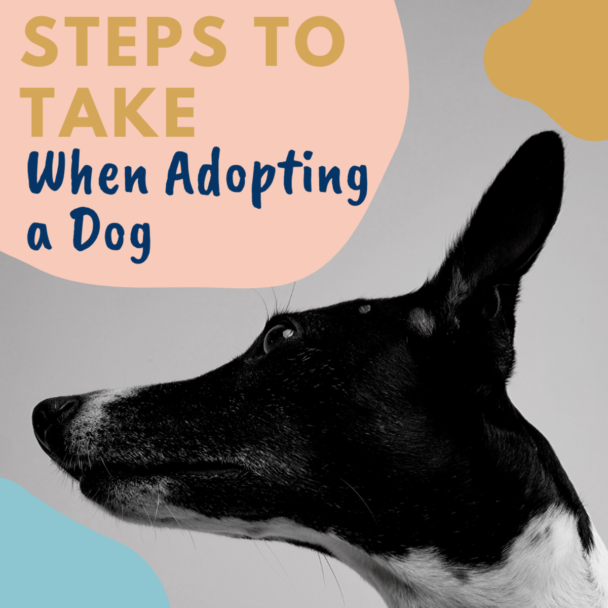 Advice for Adopting a Dog