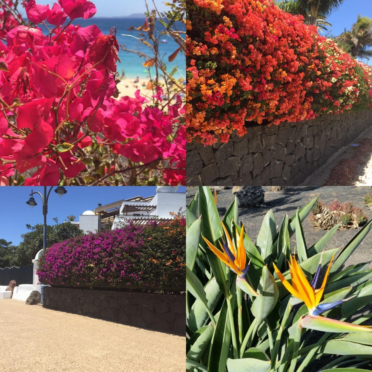 Feral Cats Of Playa Blanca, Lanzarote, Part Three