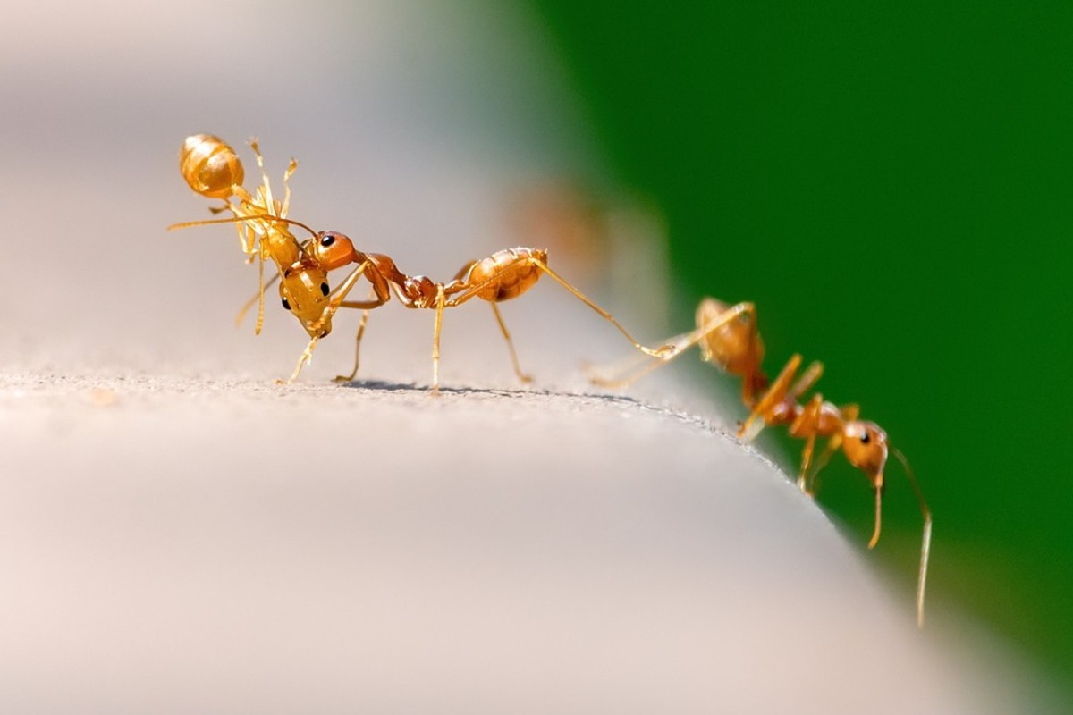 Do Ants Have Lungs? 11 Surprising Ant-Related Questions Answered