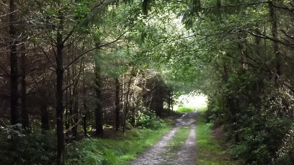 The Roman Road Near Hardy's Childhood Home