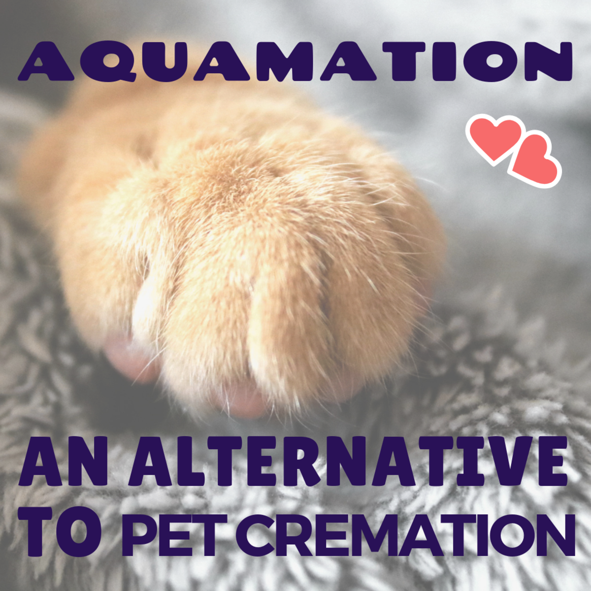 Alternative Burial and Cremation for Pets