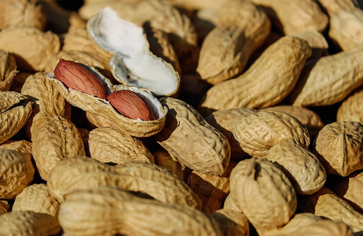 Peanuts are a common food allergy.
