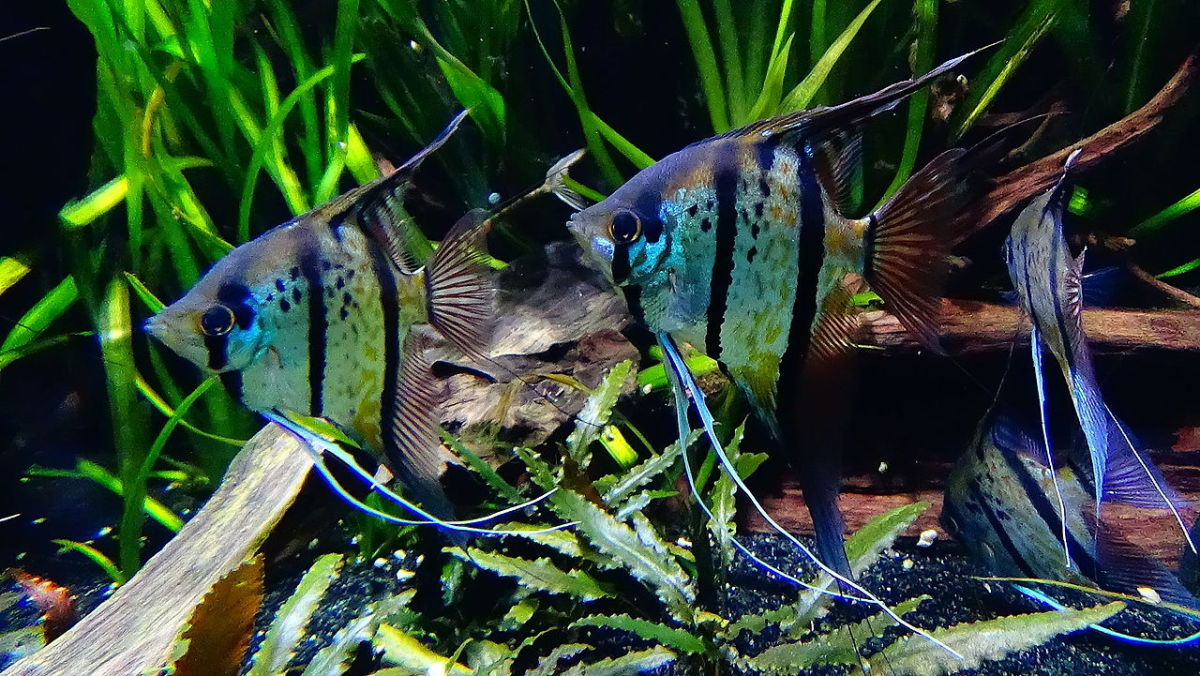Tropical fish tanks require heat, filtration and light.