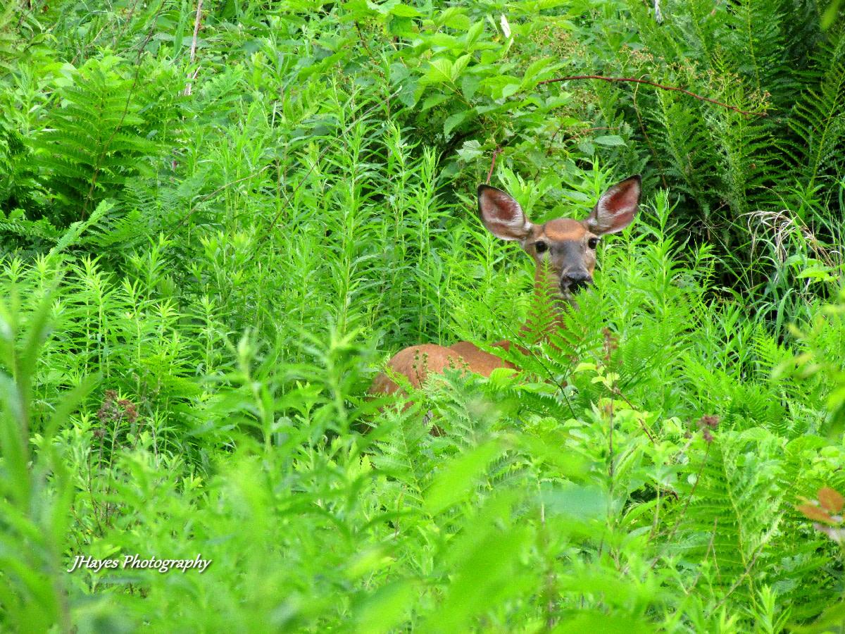 wildlife-photography-tips
