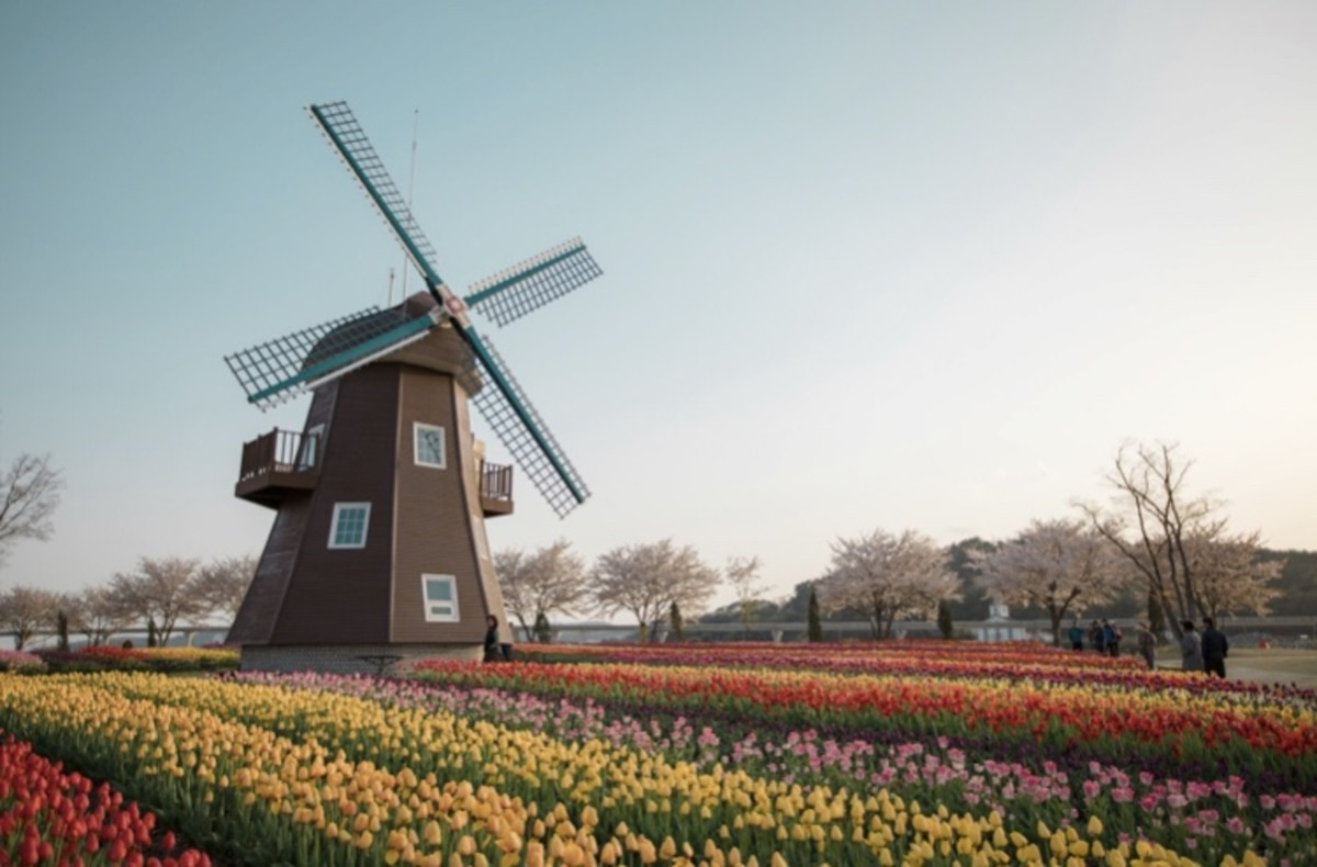 The Pros and Cons of Living in The Netherlands