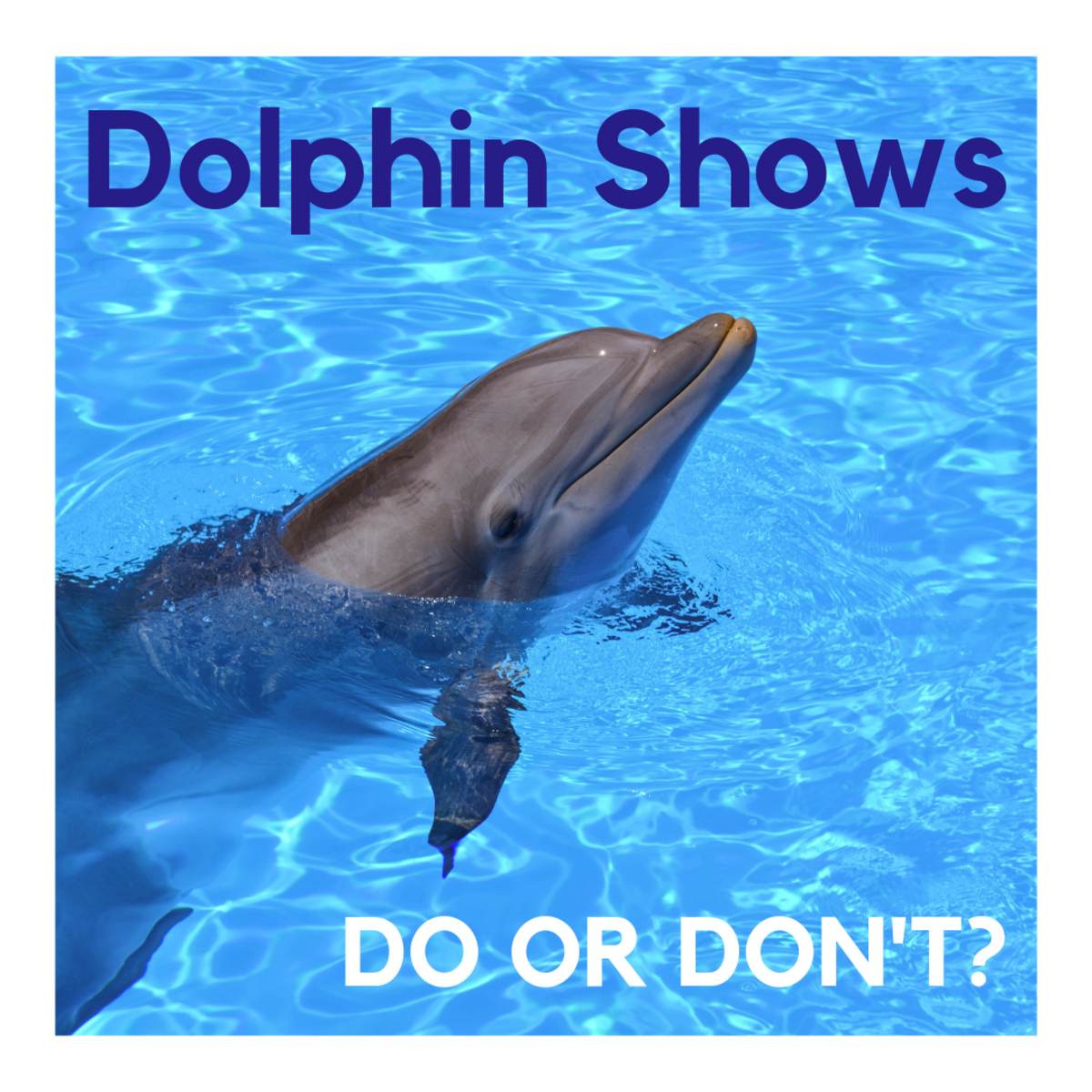 Rethink the Dolphin Show—Don't Buy the Ticket