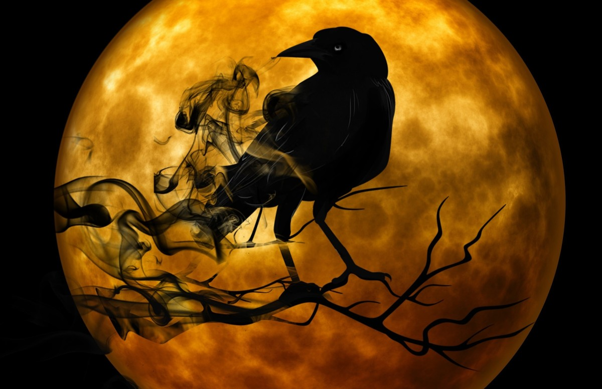 A Raven at night