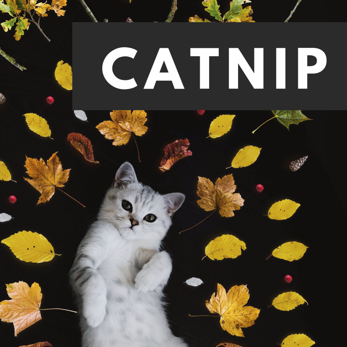 Does Catnip Get Cats