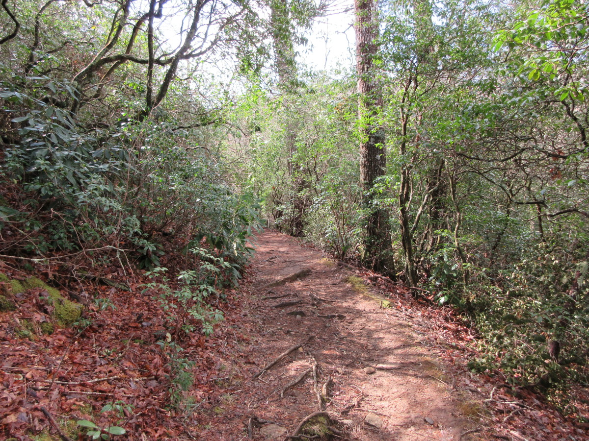 A section of the Pink Beds Loop Trail located in the Pisgah National Forest.