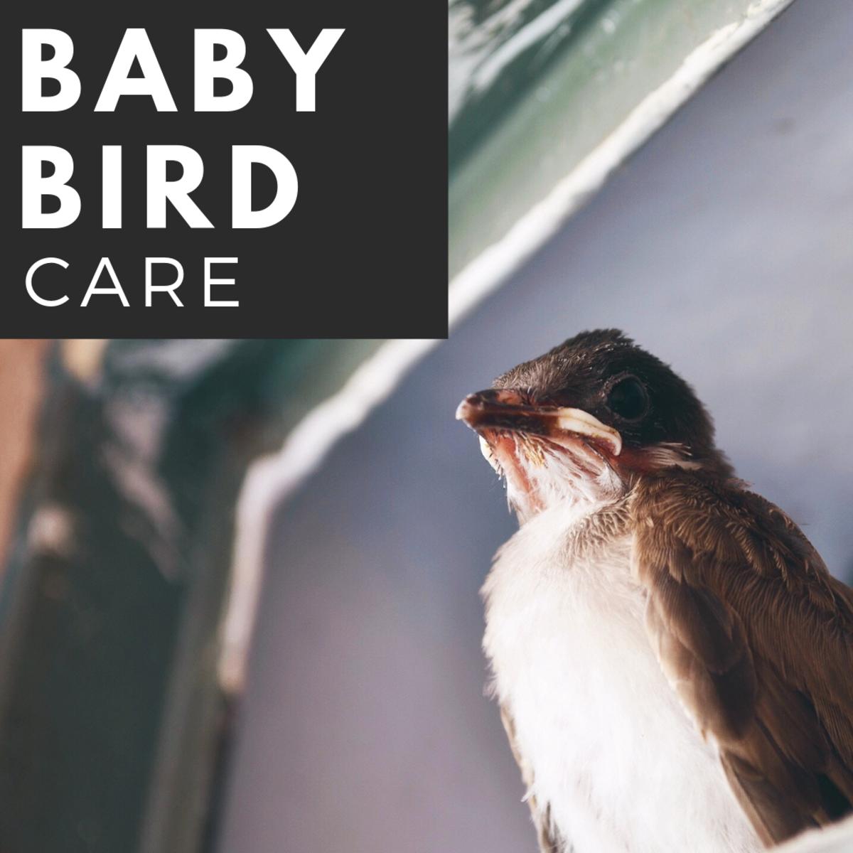 Baby Bird Care