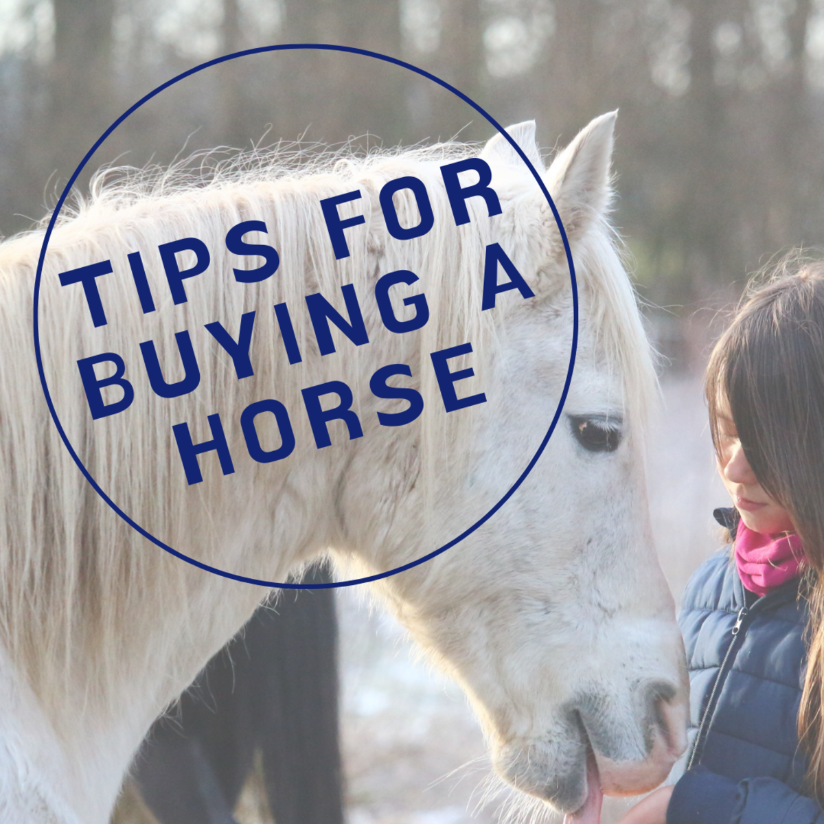 A Guide to Shopping for and Trying Horses