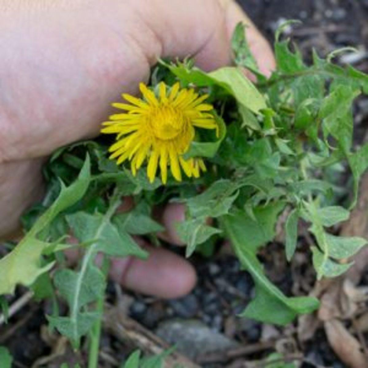 Our Spiritual Weeds