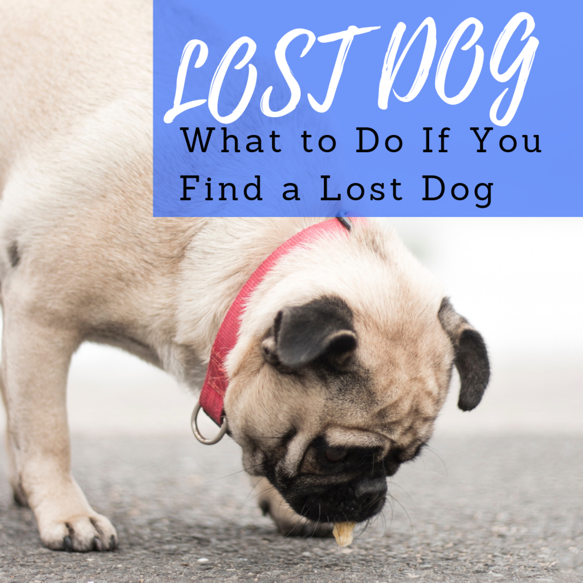 What to do if you find a lost dog.