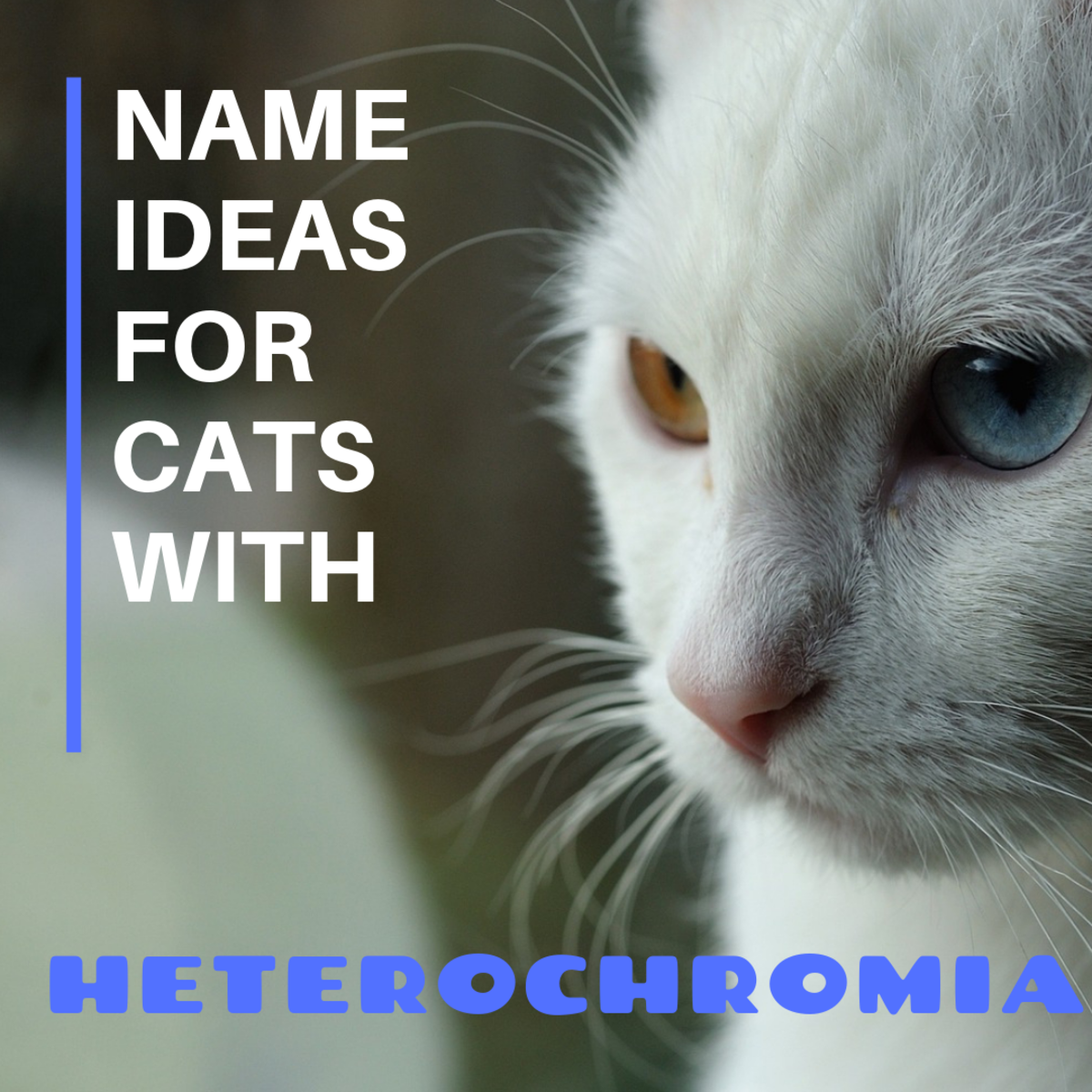 150+ Names for Cats With 2 Different-Colored Eyes (Heterochromia)