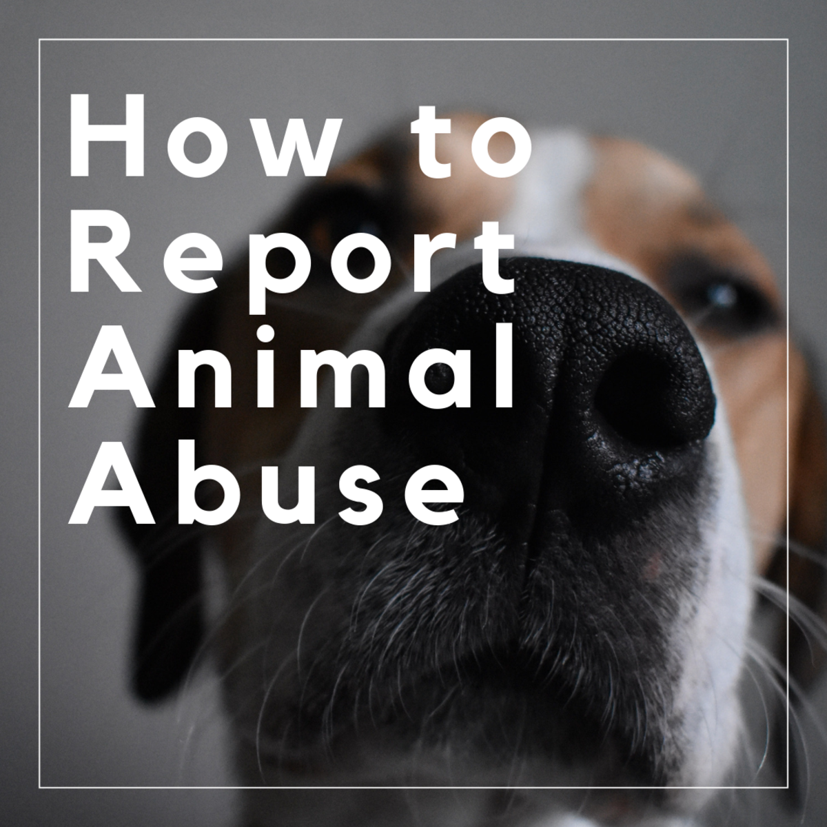 Do you think a dog or an animal is being abused? Here's how to report it.