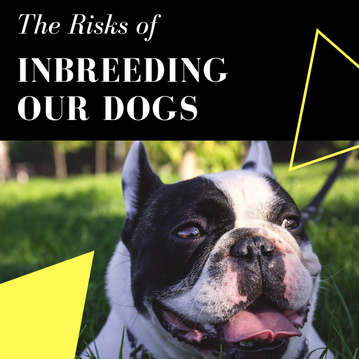 The Consequences of Inbreeding Our Dogs
