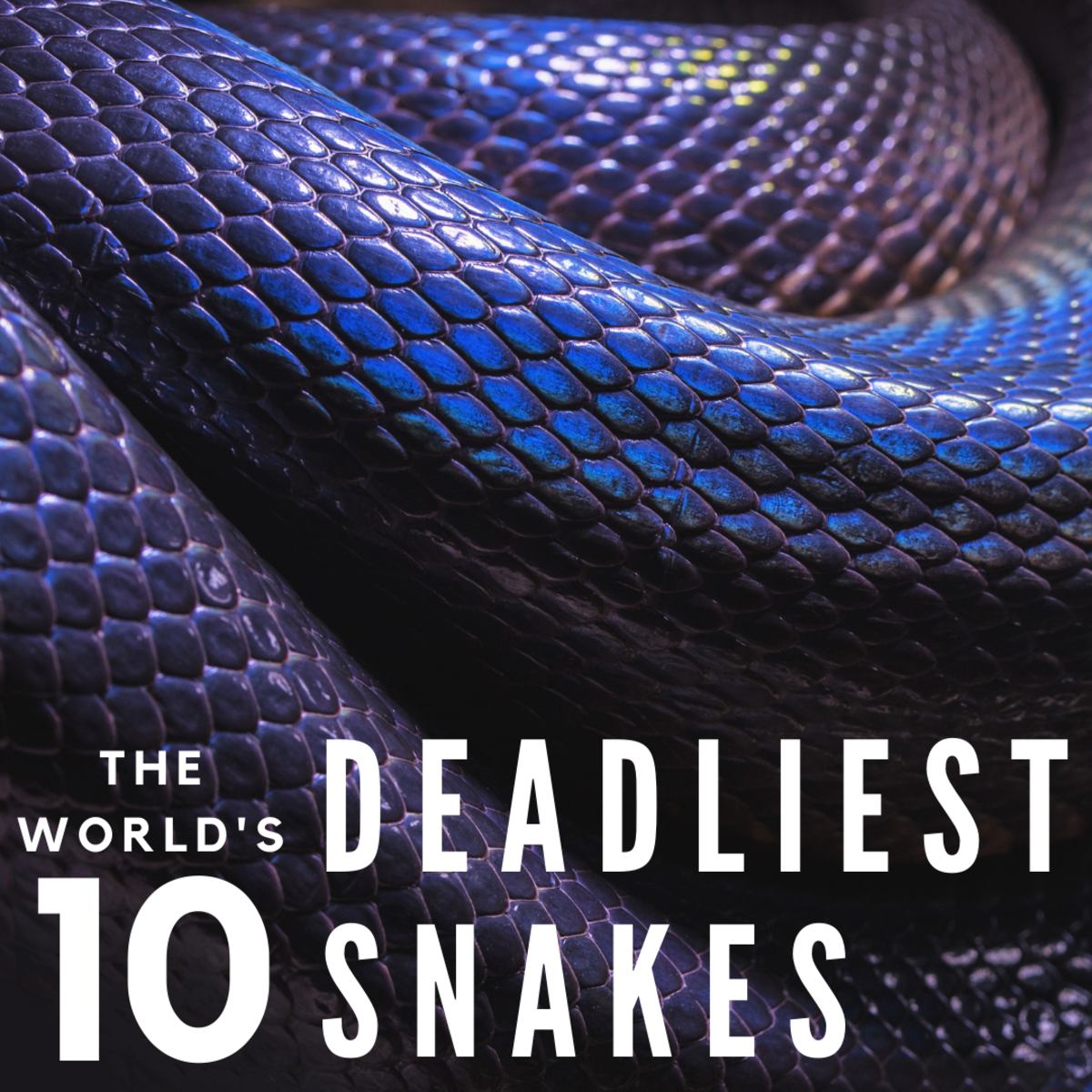 The Top 10 Deadliest and Most Dangerous Snakes in the World