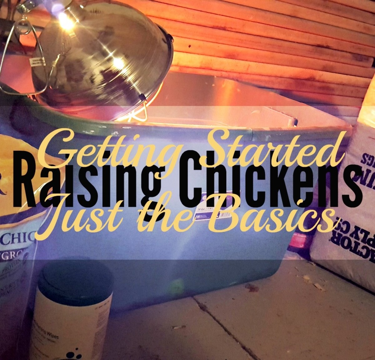 Raising Chickens: Getting Started With Just the Basics