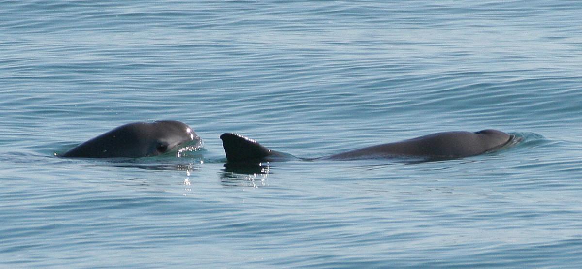 World's 9 Most Endangered Marine Animals