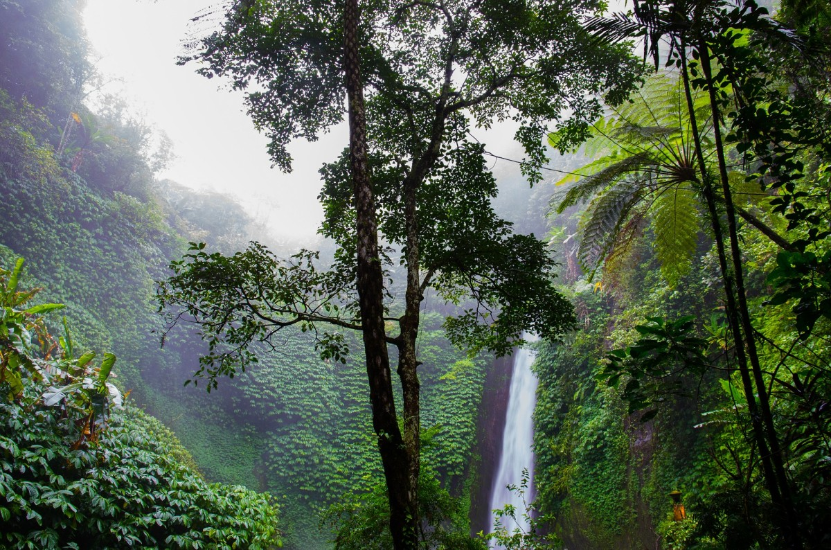 Rainforests are a unique and strikingly beautiful part of the Earth, home to many fascinating plants and animals.
