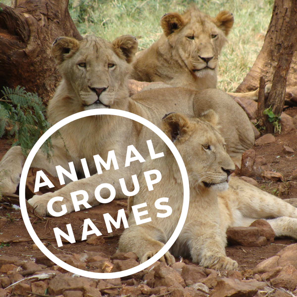 Names for Groups of Animals and Insects