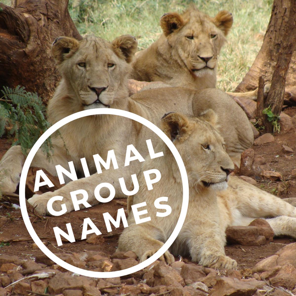 Animal Group Names