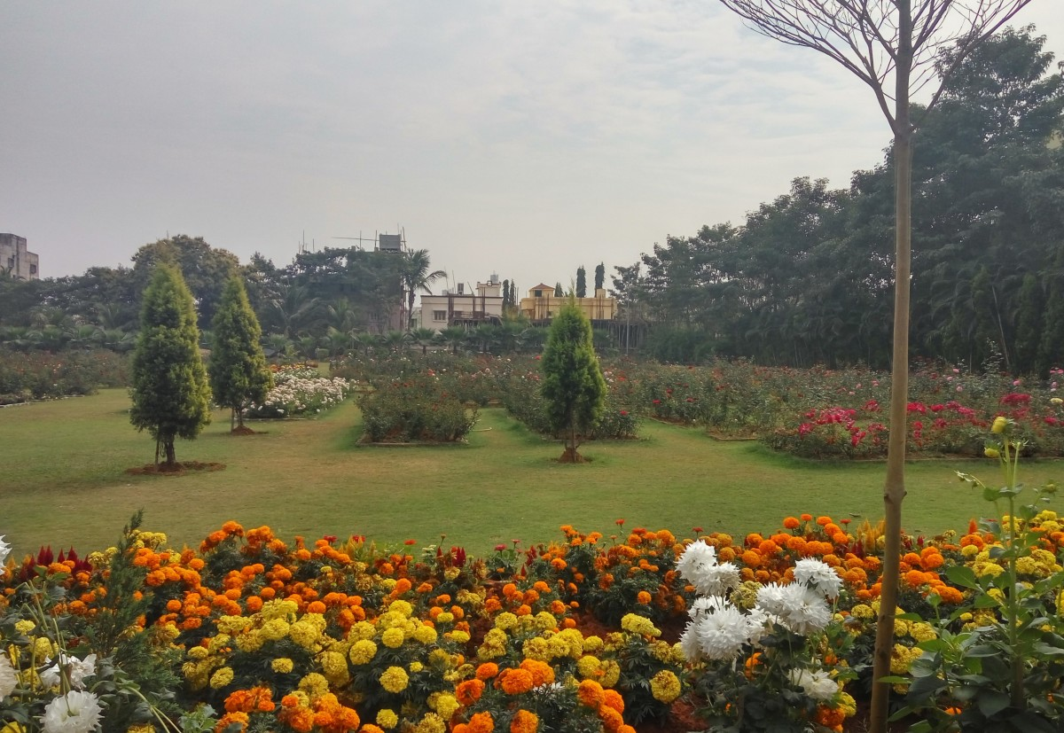 The famed rose garden in Campus 18, KIIT