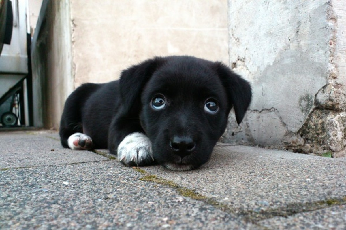 Cute Black Dog