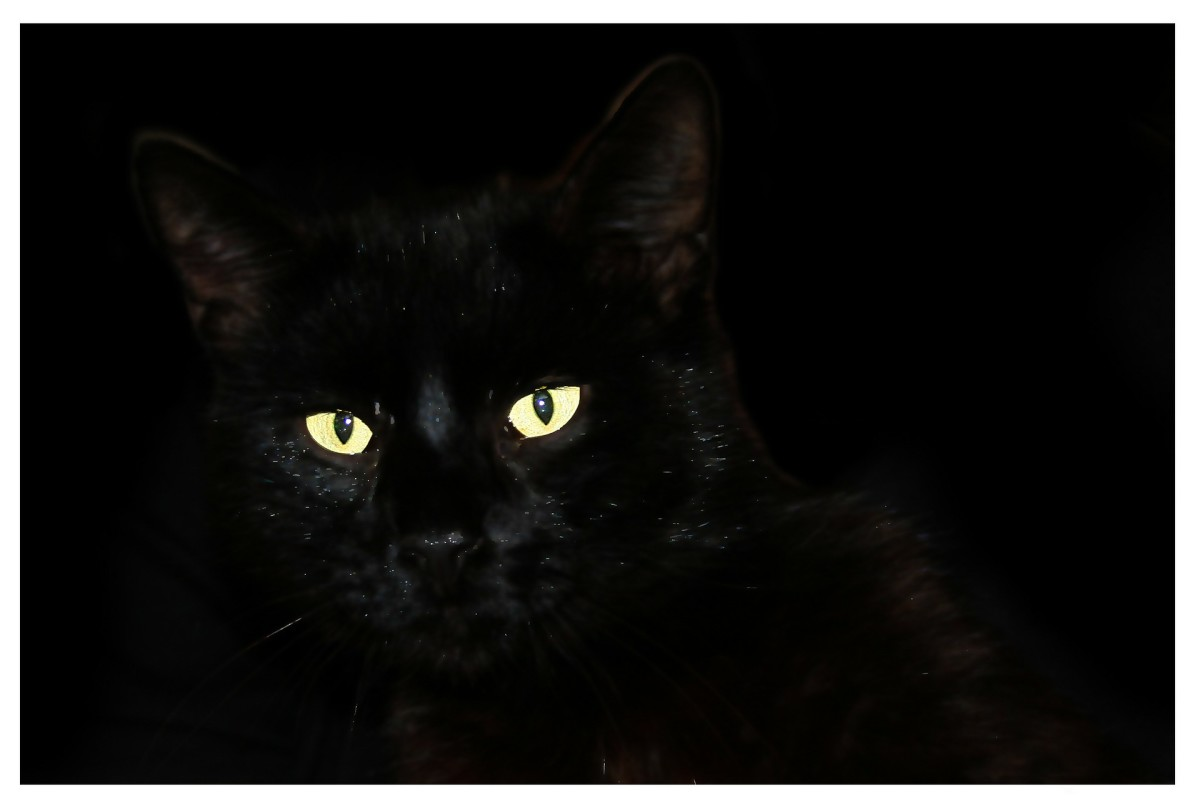 The Black Cat - a Poe'm