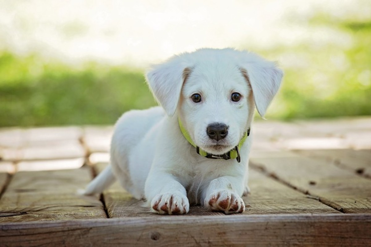 220 Cute White Dog Names With
