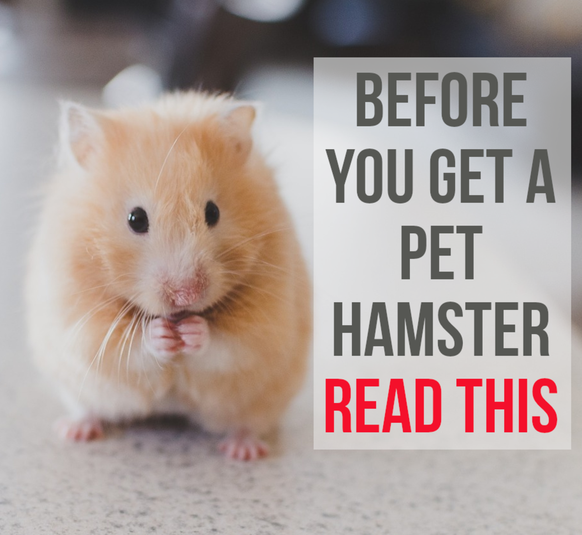 5 Reasons Not to Get a Pet Hamster