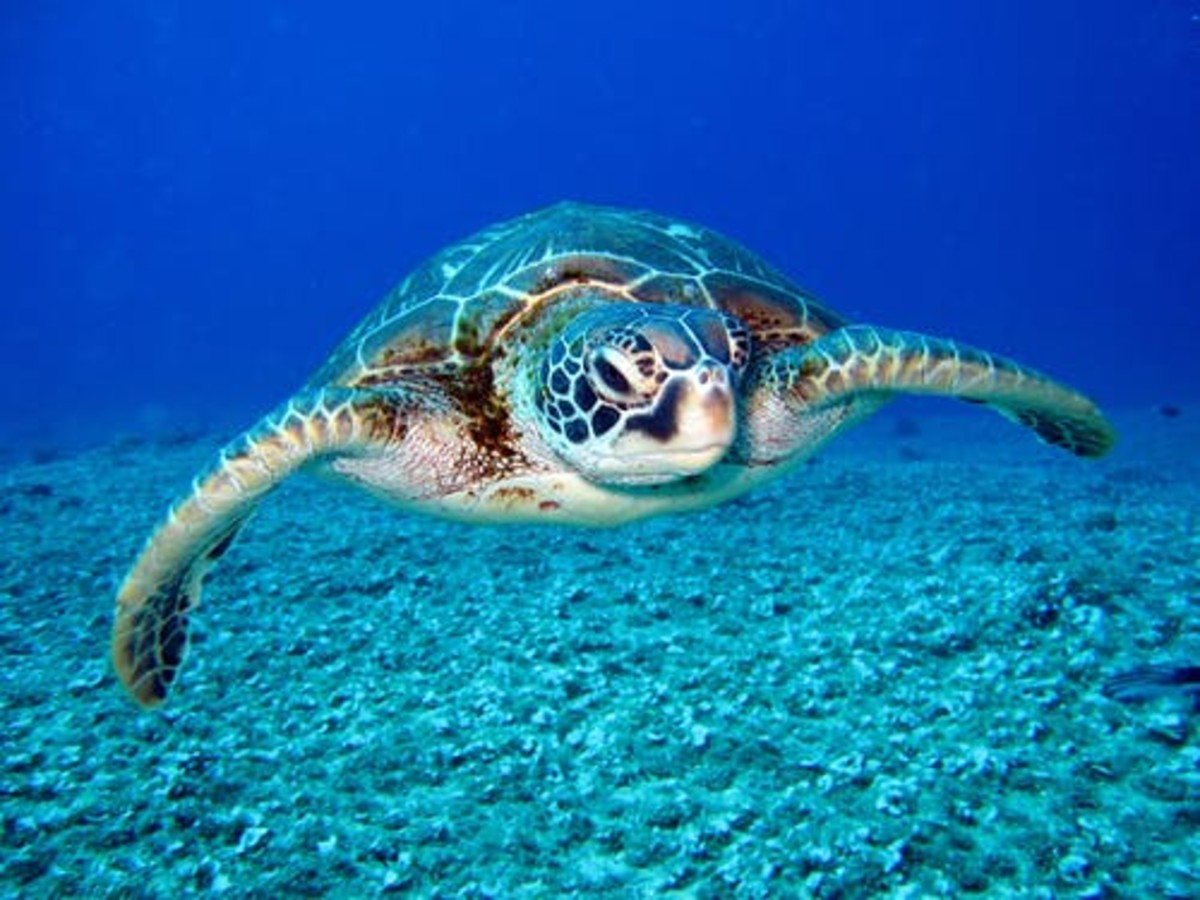 What beautiful scenes the turtle produce on or in the sea.