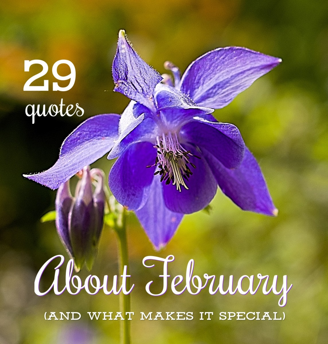 The violet is an official flower of the month of February.
