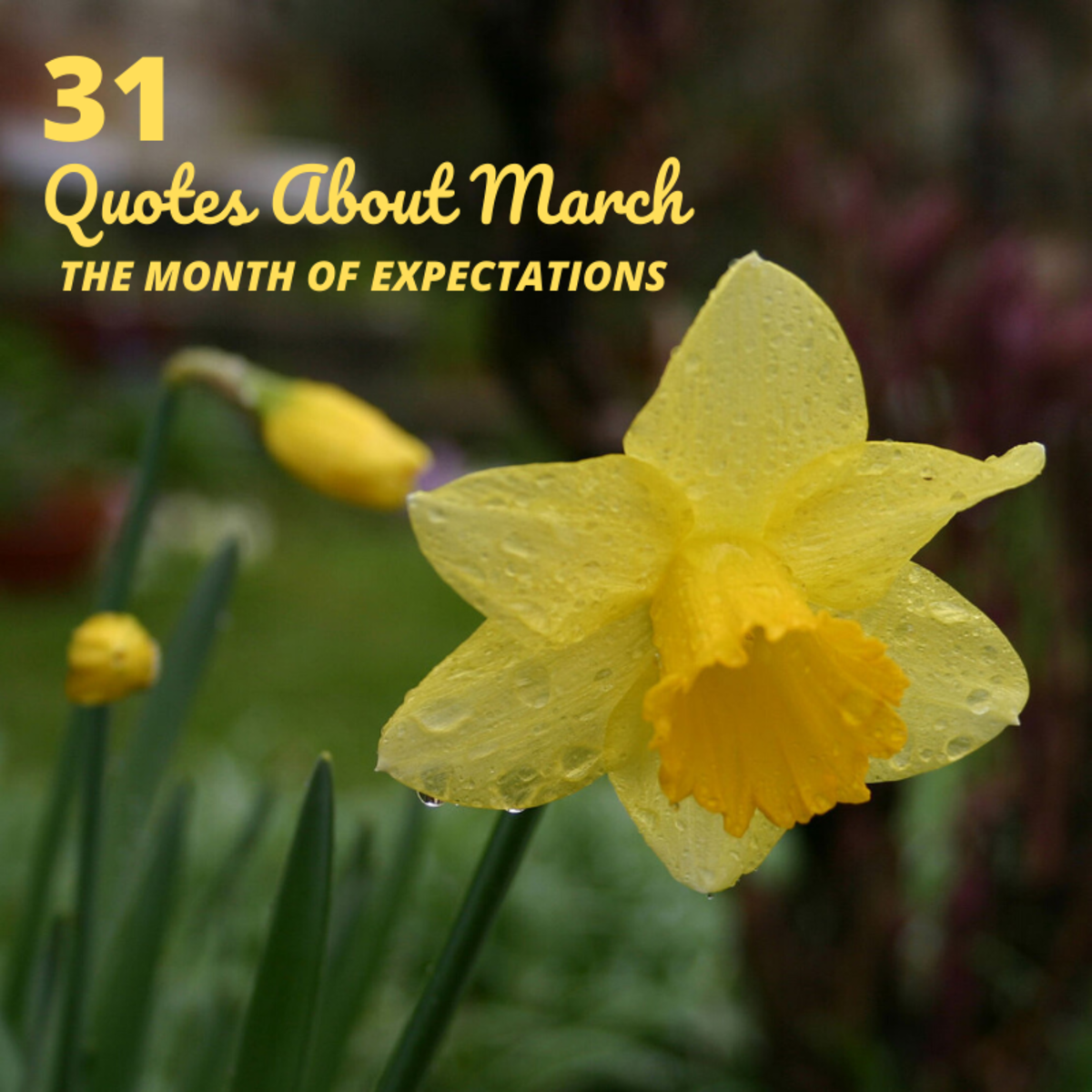 The daffodil is the official flower of the month of March.