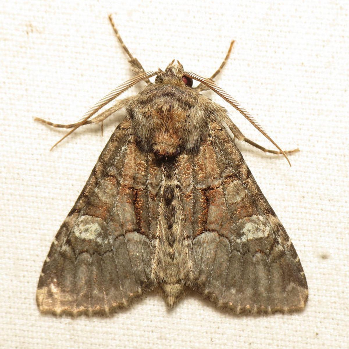 Ways to Make a Moth: A Poem