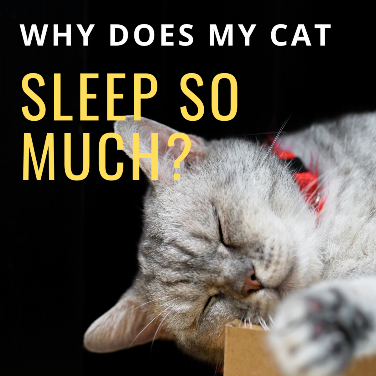 Is My Cat Sleeping Too Much?